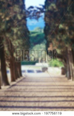 Cypress alley in park in Montenegro blurred background