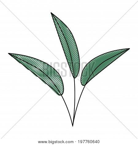 white background of colored crayon silhouette of leaves lanceolate vector illustration