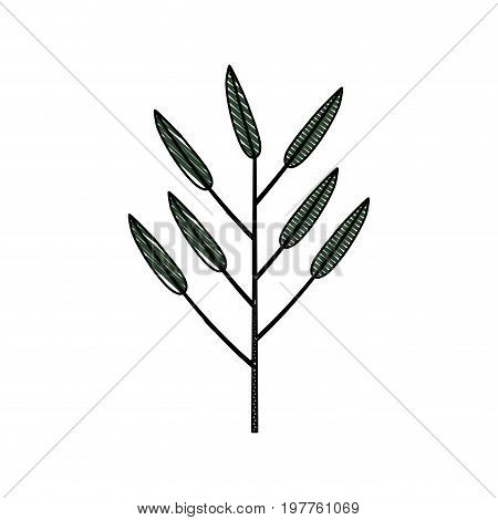 white background of colored crayon silhouette of branch with leaves lanceolate vector illustration
