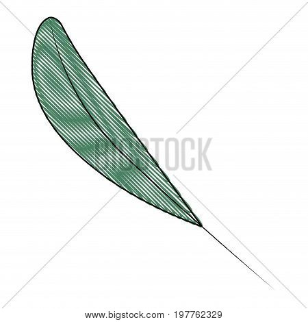 white background of colored crayon silhouette of leaf lanceolate vector illustration