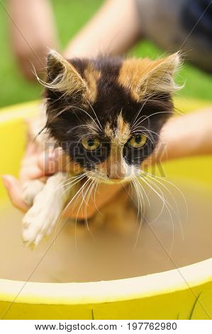 kids wash kitten in basin with soap close up outdoor summer photo