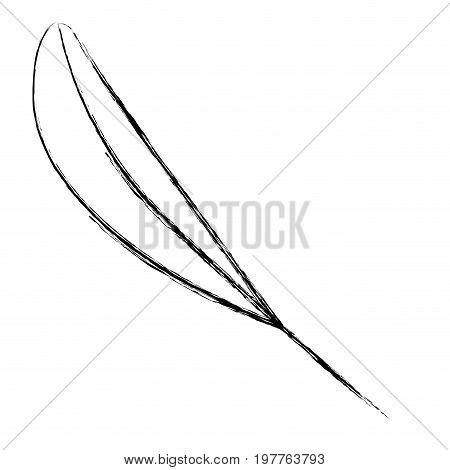 monochrome blurred silhouette of leaf lanceolate vector illustration
