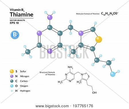 Structural chemical molecular formula and model of thiamine. Atoms are represented as spheres with color coding isolated on background. 2d or 3d visualization and skeletal formula. Vector illustration