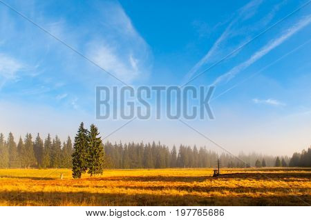 Autumn landscape sunny and hazy morning with two spruces, near Bozi Dar, Krusne Mountains, Czech Republic.