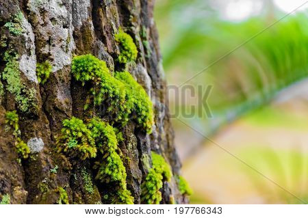 Beautiful green moss grows on the tree in forest