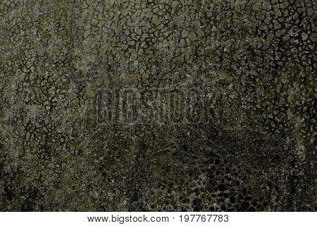 Lichen on the dark old stone background