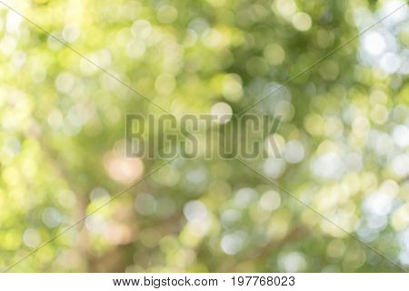 Fresh green abstract bokeh background, sunlight shining reflects with tree leaf shallow depth of field