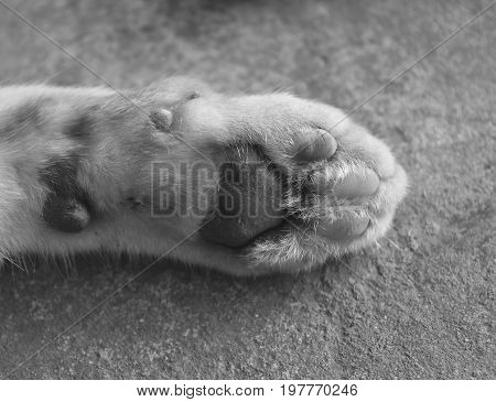detail underfoot of cat foot for background