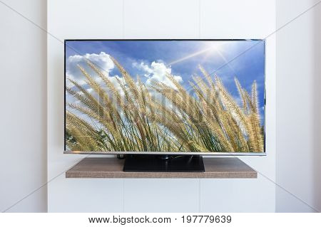 TV television Grass flower on screen white wall background. with clipping path