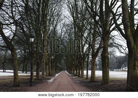Park footpath in winter with dead trees, mystery spooky morning in winter