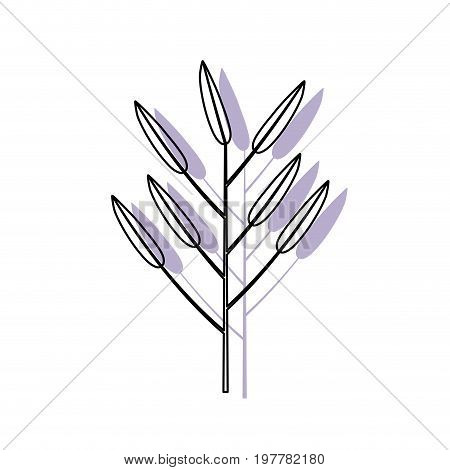 white background with watercolor silhouette of branch with leaves lanceolate vector illustration