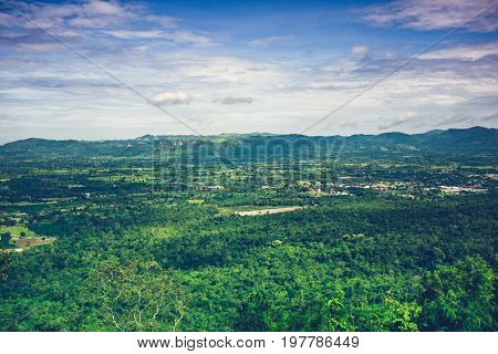 Colorful Fresh Evergreen Forest Against Beautiful Nature With Blue Sky And Cloudy.
