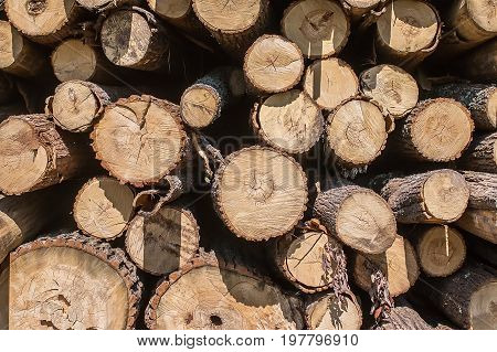 Pile Of Old Firewood For Background