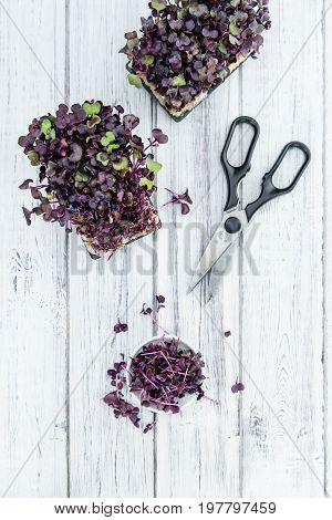 Fresh Cutted Cress On Wooden Background (selective Focus)
