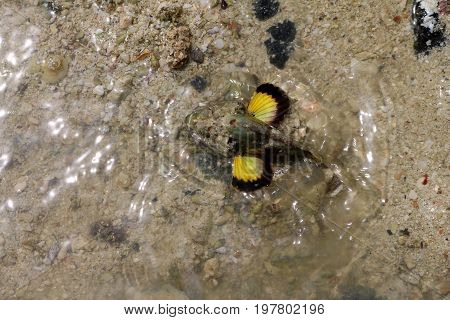 Stonefish with yellow fin in shallow sea waters near the beach