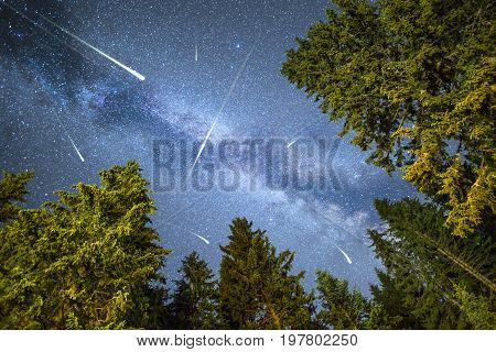 Pine Trees Silhouette Milky Way Meteor Shower