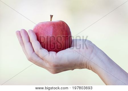 Female hand holding red apple close-up on light background
