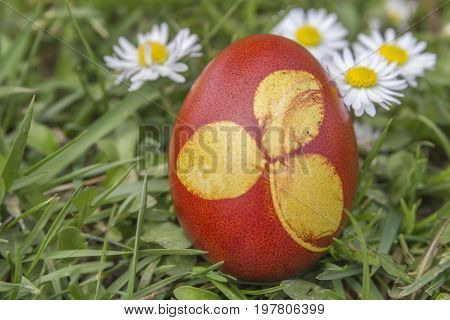 Natural Dyed Easter Egg Colored With Onion Skins 2