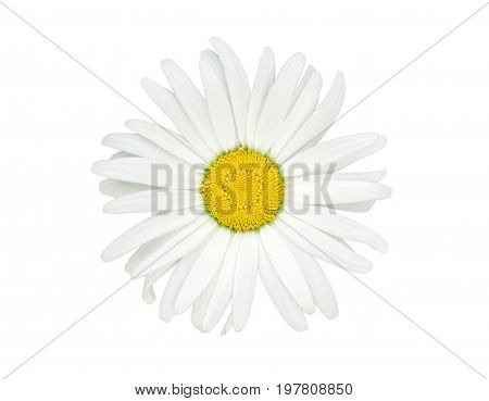 Top view of the flower of the oxeye daisy on a light background closeup
