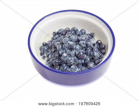 Dessert made of the fresh wild bilberries and sweetened condensed milk in blue bowl on a white background