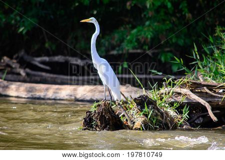 A view of a white Egret perched on a log on the San Juan river