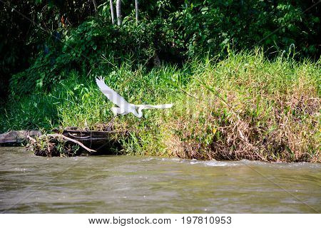 A view of a white Egret flying over the San Juan river