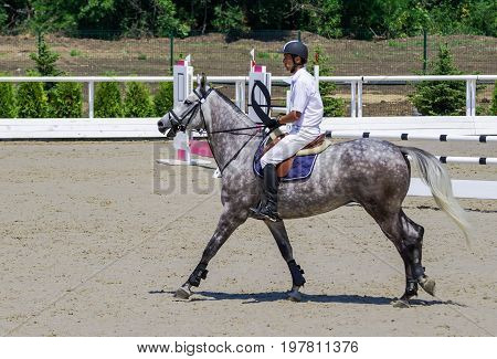 Rider on gray horse in jumping show, equestrian sports. Dappled gray horse and rider in white shirt on training ground. Hot, shiny day.