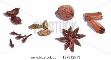 Spices - cinnamon, basil, cardamom, cloves and anis Watercolor food painting