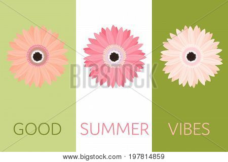 Summertime. Pink marigold flower in watermelon colors and in different shades.