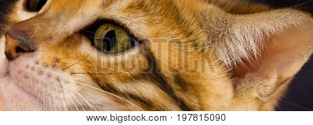 Face of cute kitten and ear like background close-up