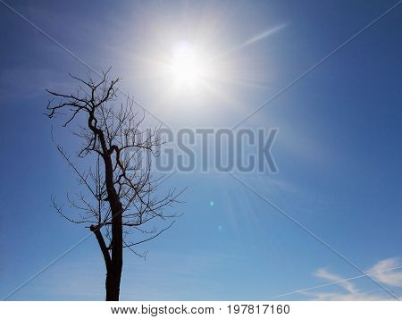 Authentic Landscape Of Dry Tree Branches Without Leaves Against The Bright Scorching Sun Of The Summ