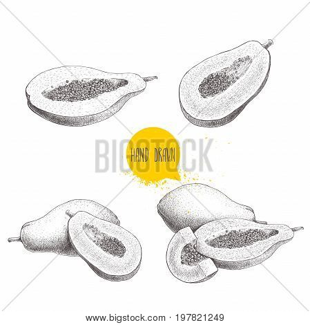 Hand drawn papaya fruits set. Whole pawpaw half cut papaya with seeds. Sketch style vector illustration of exotic food isolated on white background.