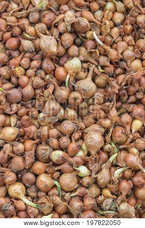 Small Seed Onions Background