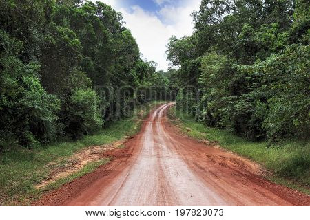 road in the tropical rainforest in Australia