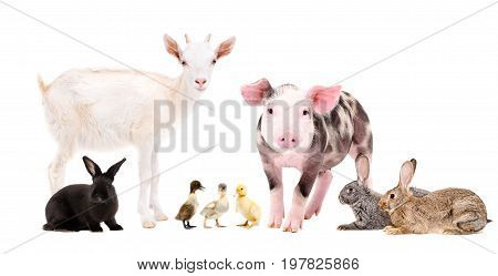 Group of cute farm animals, isolated on white background