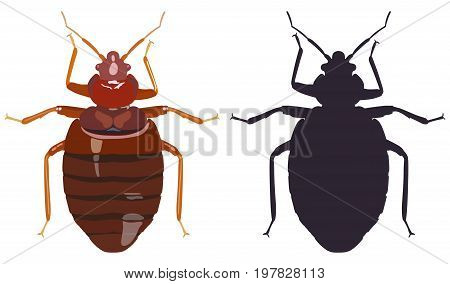 Vector color image of a bug bedbug and its silhouette on a white background.