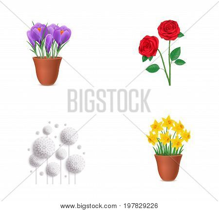 Floral elements icon set. Potted irises Roses White dandelions Potted narcissus