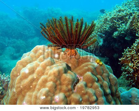 Underwater inhabitants of the South-Chinese sea, sea lily poster