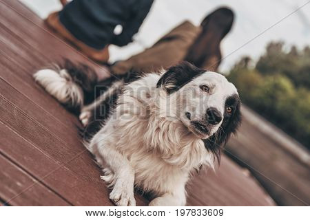 Time to relax. Cute dog lying down on the wooden platform near the lake with his owners sitting in the background