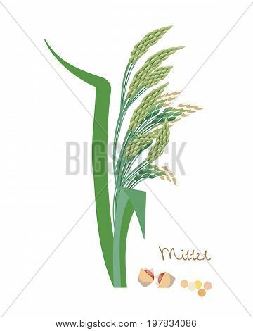 Concept of cereal seed plant with leaves. Vegetarian or vegan healthy diet nutrition food and porridge ingredient for grocery store. Vector illustration isolated on white background.