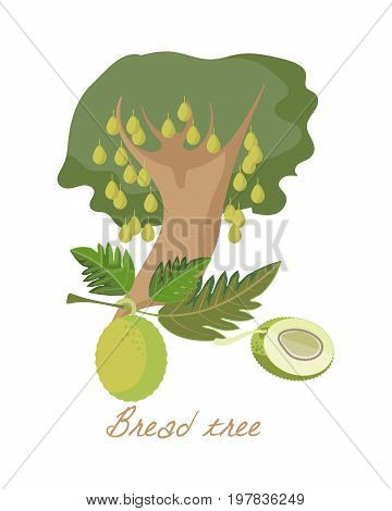 Tropical forest herbs and plants with leaves, flowers, fruits. Beautiful breadfruit tree of genus Artocarpus with leaves and fruits. Vector illustration isolated on white background.