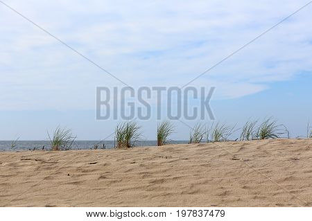 Sand dunes on the Baltic Sea covered with several clumps of sea grass