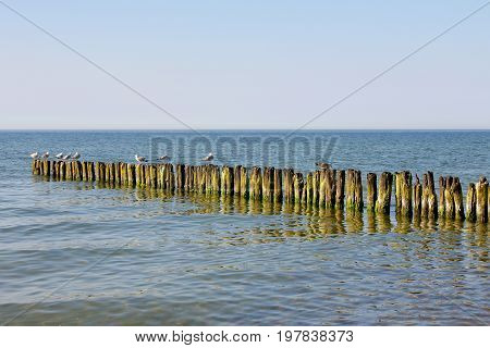 There are several seagulls on the breakwater. It is seen on the Baltic Sea shoreline in Kolobrzeg in Poland