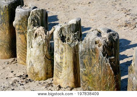 Thick wooden poles these are the breakwaters and were placed in bottom of the sea on the coastline to protect the shore against an ominous effects of sea waves