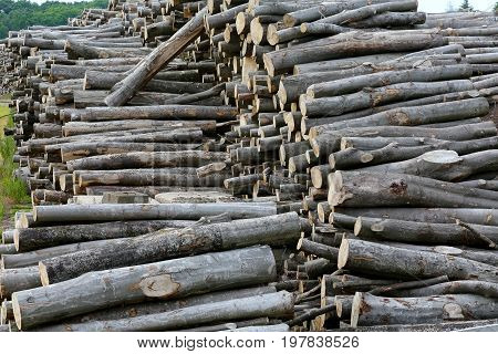 Wood stocks are stacked on the ground in the open air store