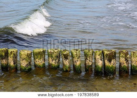 Wooden poles stick out of the seabed and one sea wave can be seen. This breakwater it is at the beach on the Baltic Sea shore in Kolobrzeg in Poland