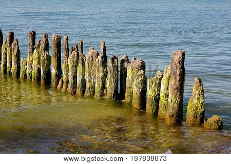 Wooden poles stick out of the seabed. This breakwater it is at the beach on the Baltic Sea shore in Kolobrzeg in Poland