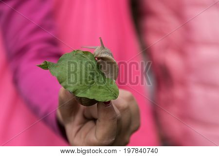Hand holding snail on a green leaf - pink contrast in the background