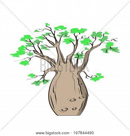 African iconic tree, baobab tree icon. Adansonia gregorii. Vector illustration