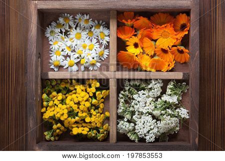 Medicinal herbs tansy daisy calendula yarrow in an old wooden box on the table.